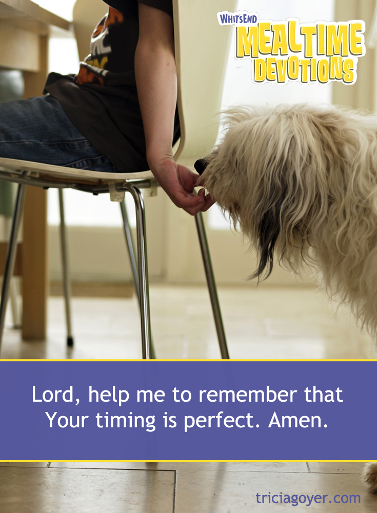 Lord, help me to remember that Your timing is perfect! Read more in Whit's End Mealtime Devotions by Tricia Goyer